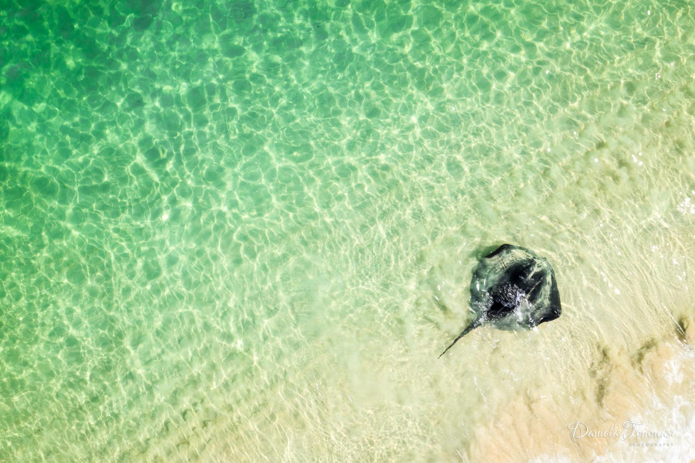 Stingray - Daniela Tommasi Photography