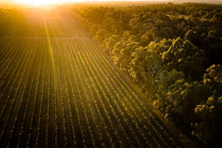 Vineyard -Suncet - Daniela Tommasi Photography