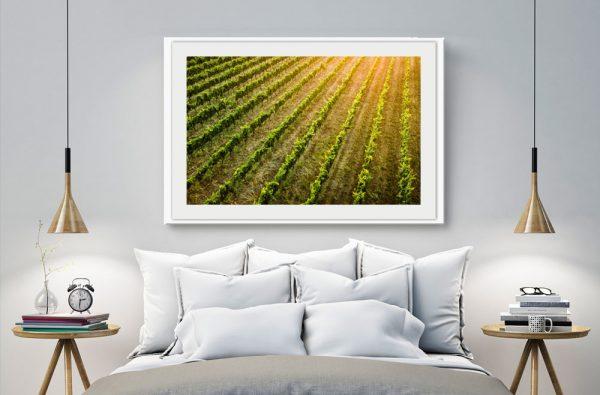 Vineyard - Daniela Tommasi Photography