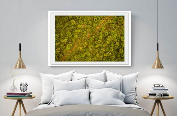 Grass Trees - Daniela Tommasi Photography