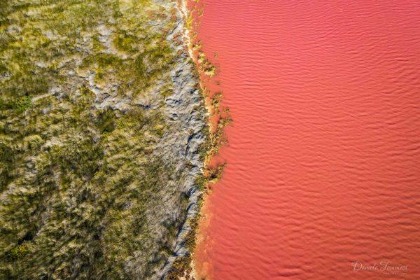 Pink Lake and grass - Daniela Tommasi Photography