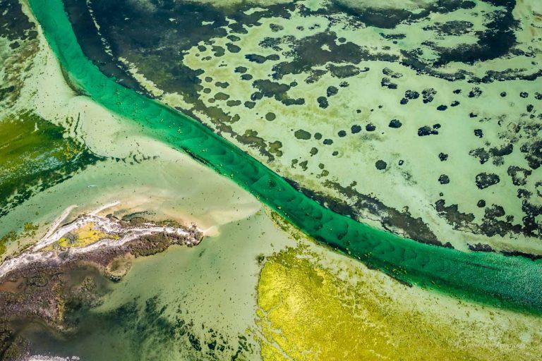 Shark Bay- Greens - Daniela Tommasi Photography
