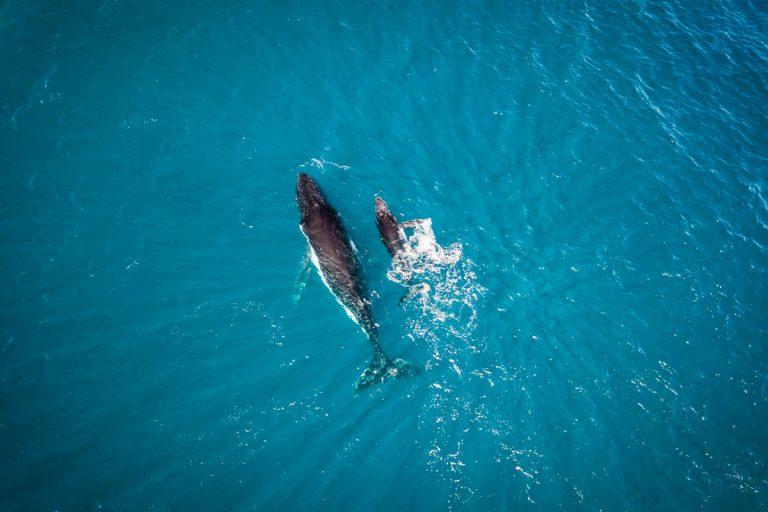 Whales - Australia SW - Daniela Tommasi Photography