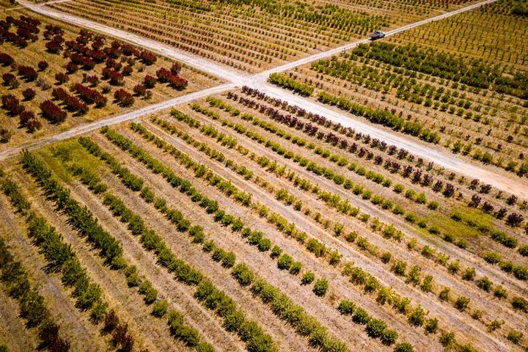 Protea Farm - Daniela Tommasi Photography