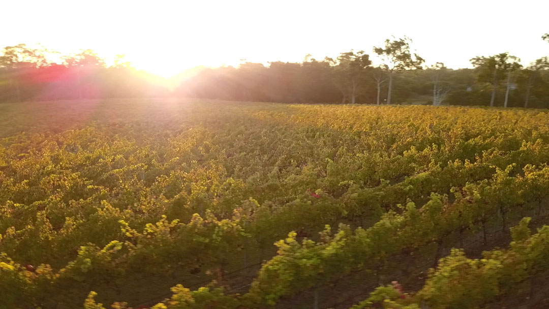 Vineyard-Sunset-VIN02-Still_1.2.1