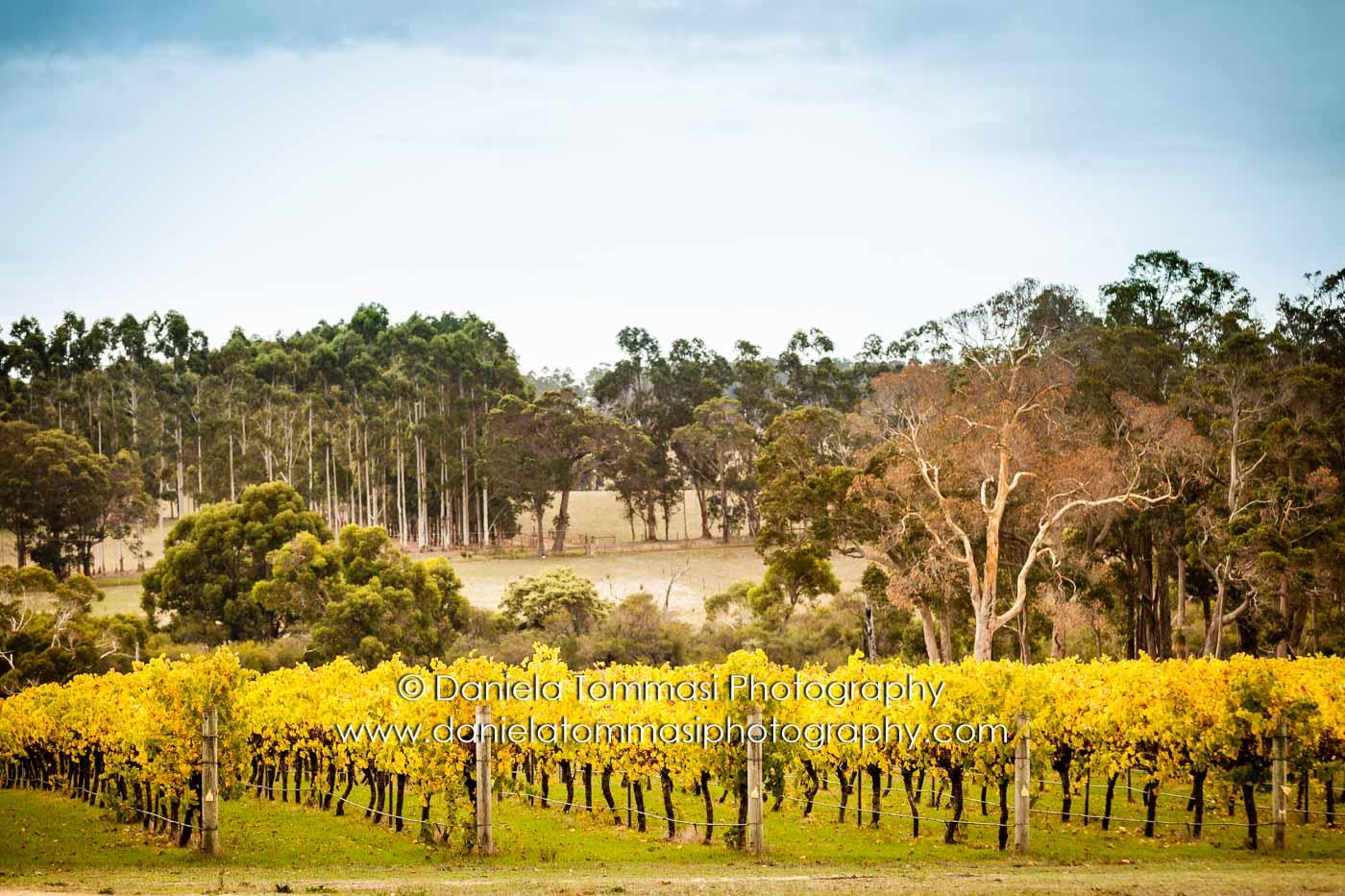 Winery-Daniela Tommasi Photography-11