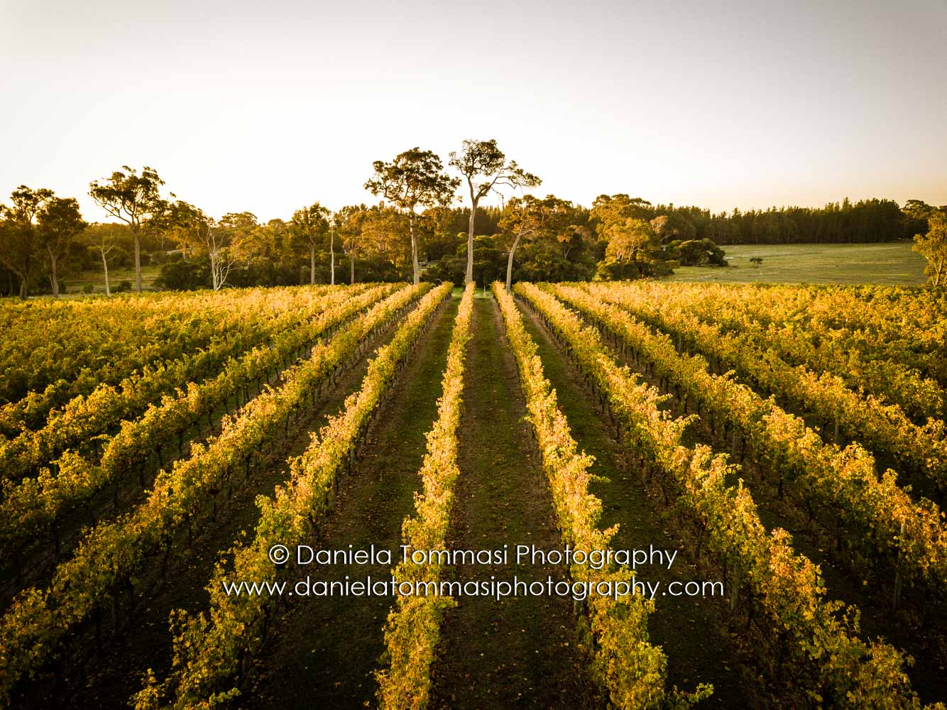 Winery-Daniela Tommasi Photography-15