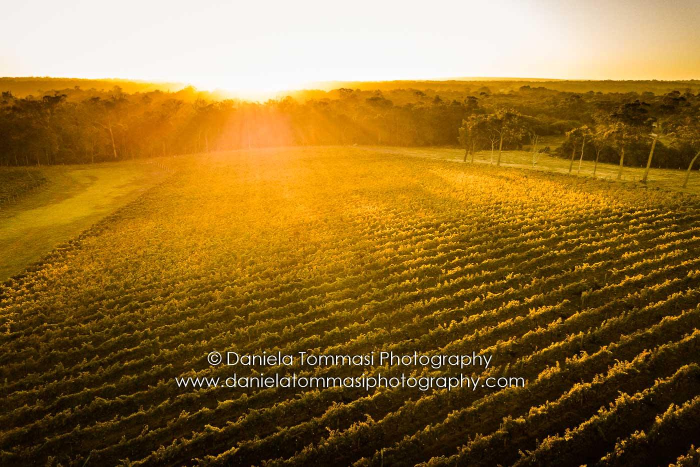 Winery-Daniela Tommasi Photography-16