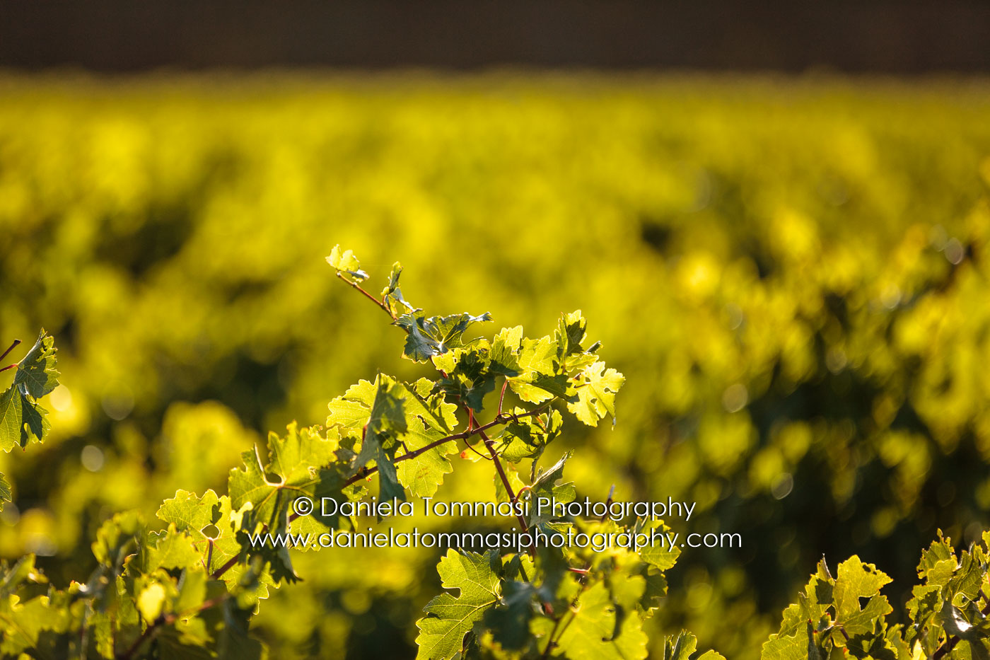 Winery-Daniela Tommasi Photography-4