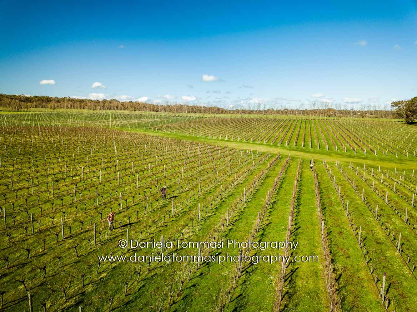 Winery-Daniela Tommasi Photography-6