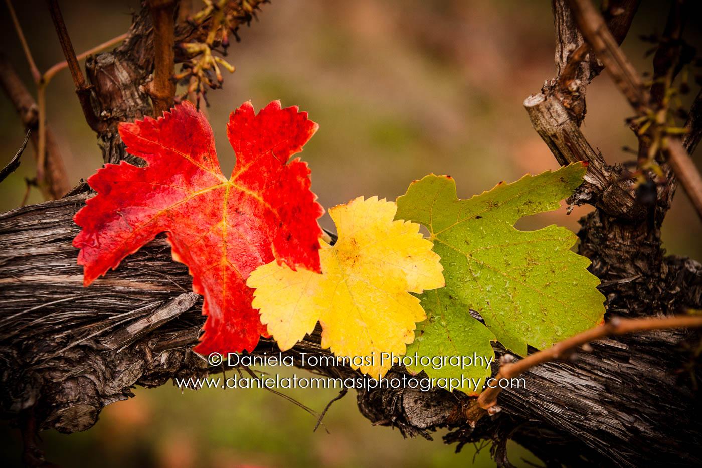 Winery-Daniela Tommasi Photography-9