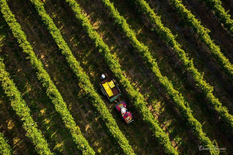 FrazerWoods-Aerial--Daniela Tommasi Photo