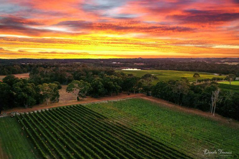 Winery sunrise-Daniela Tommasi Photo