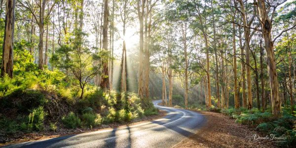 Boranup Forest-Daniela Tommasi Photography-sunrise