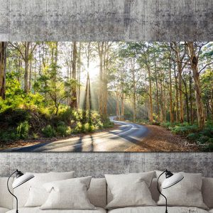 Road in the Forest – Panoramic