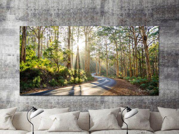 Boranup Forest-Daniela Tommasi Photography
