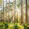 Boranup Forest-Daniela Tommasi Photography- Close up