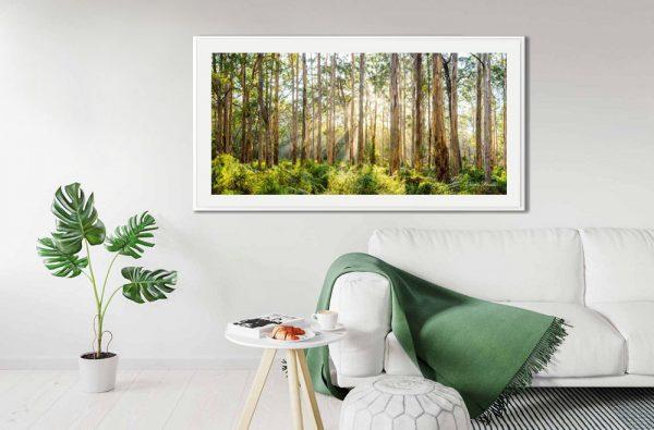 Boranup Forest-Daniela Tommasi Photography-2