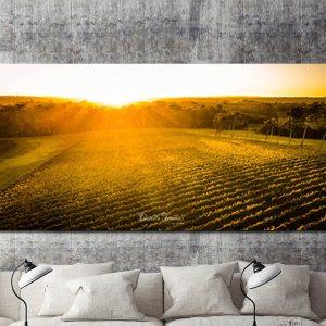 Vineyards – Panoramic